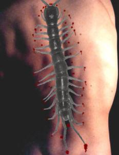 Centiped